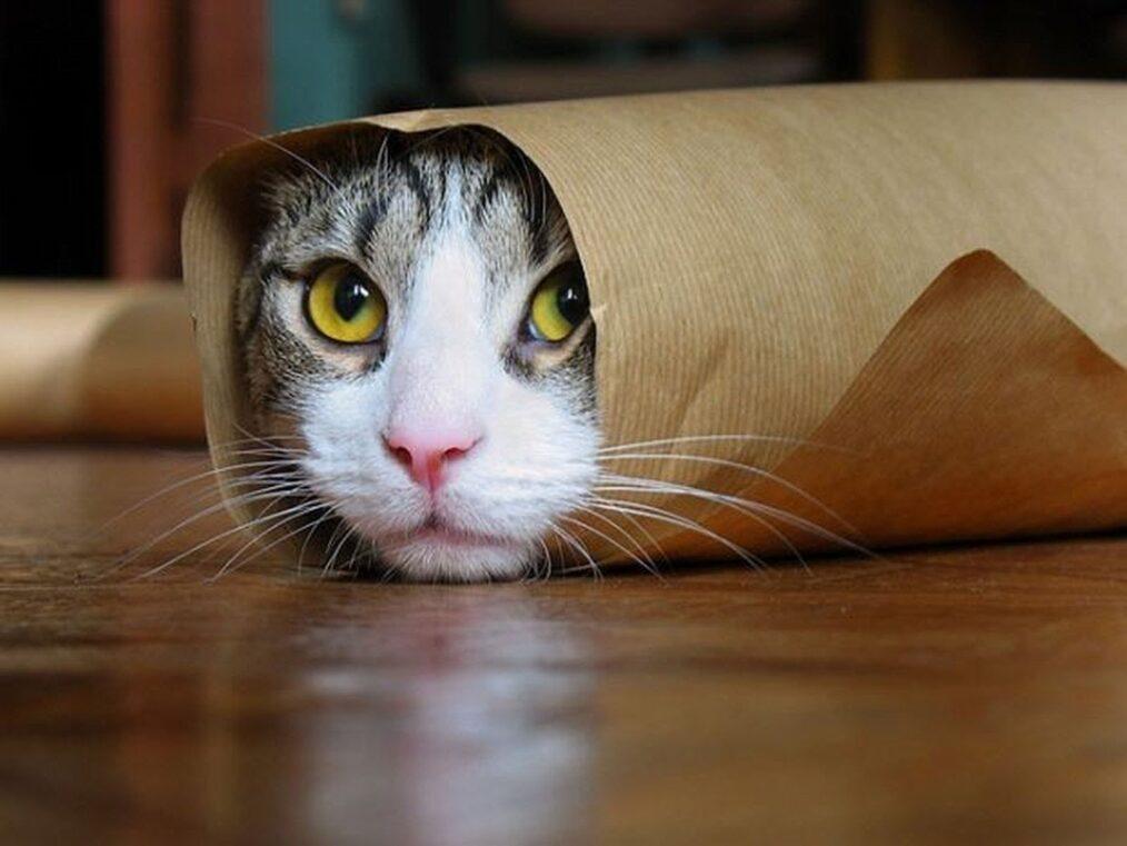 חתול מציץ מנייר עיתון